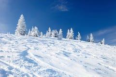 Arbres de l'hiver en montagnes couvertes de neige Photographie stock libre de droits