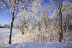 Arbres de l'hiver et ciel bleu Image libre de droits