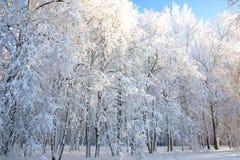 Arbres de l'hiver sur le ciel bleu Photos libres de droits