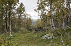 Arbres de la Norvège Image stock