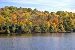 arbres de lac d'automne Images libres de droits