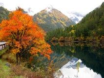 Arbres de lac et de couleur Photographie stock