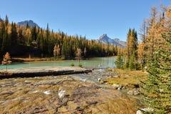 Arbres de mélèze d'or et lacs cascade, Yoho Images libres de droits