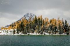 Arbres de mélèze dans des couleurs d'automne sur la banque du lac chester, Canada Images stock