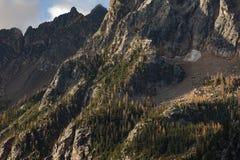 Arbres de mélèze dans les montagnes du nord de cascade Photo stock