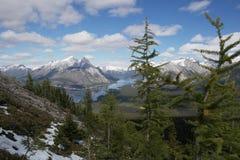 Arbres de mélèze dans les montagnes rocheuses avec le fond de lac Image stock