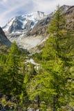Arbres de mélèze européen s'élevant dans les Alpes suisses Images libres de droits