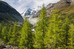 Arbres de mélèze s'élevant au-dessus des d'Anniviers de Val Images libres de droits