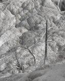 Arbres de Mammoth Hot Springs en noir et blanc photo libre de droits