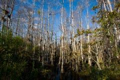 Arbres de marais Photographie stock libre de droits