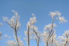 arbres de matin magiques image libre de droits