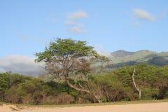 Arbres de Maui image stock