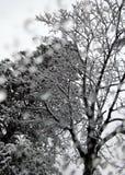 Arbres de Milou Image stock
