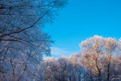 Arbres de Milou contre le ciel Photo stock