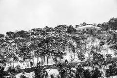 Arbres de Milou dans la forêt photographie stock libre de droits