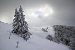 Arbres de Milou, hiver dans les VOSGES, France Photo stock