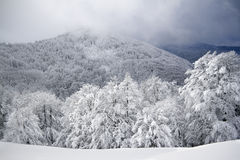 Arbres de Milou, hiver dans les VOSGES, France Photographie stock
