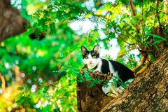 arbres de montée de chat pour attraper des écureuils Mais il ne peut pas s'élever vers le bas photos libres de droits