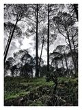 Arbres de montagne et un jour nuageux Photographie stock