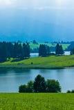 arbres de montagnes d'horizontal de prairie Image libre de droits