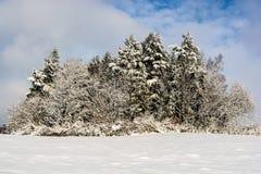 Arbres de neige Photographie stock libre de droits