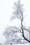 Arbres de neige Image libre de droits