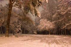 arbres de neige Image stock