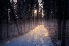Arbres de neige en brouillard Photo libre de droits