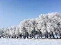 Arbres de neige en hiver photographie stock