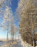 Arbres de neige sur le lever de soleil Images stock