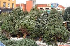 Arbres de Noël à vendre Images stock