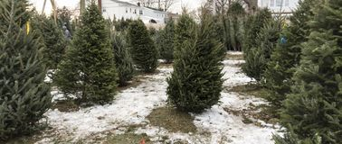 Arbres de Noël à vendre avec la neige au sol images stock