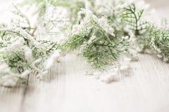 Arbres de Noël. Photographie stock libre de droits