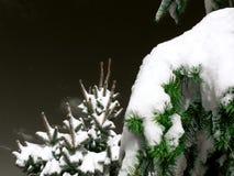 Arbres de Noël avec la neige Images stock
