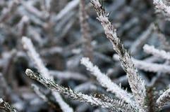 Arbres de Noël couverts dans la neige Photos stock
