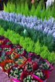 Arbres de Noël décoratifs avec des fleurs de Kalanchoe Images libres de droits