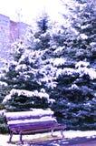 Arbres de Noël dans la neige et un banc Photographie stock libre de droits