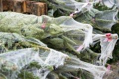 Arbres de Noël empilés dans les filets Photos stock