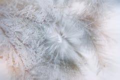Arbres de Noël neigeux de fond Image libre de droits