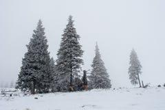 Arbres de Noël noirs et blancs dans le brouillard Image libre de droits