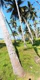 Arbres de noix de coco à côté d'une voie d'accès à un village de pêche dans l'Inde du sud et d'un groupe de personnes Photographie stock