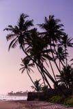 Arbres de noix de coco au coucher du soleil images libres de droits