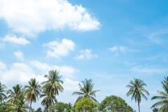 Arbres de noix de coco avec le ciel bleu l'été en Thaïlande Photo libre de droits
