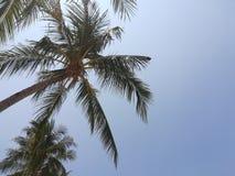 Arbres de noix de coco dans le jour ensoleillé photos stock