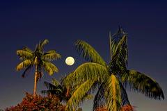 Arbres de noix de coco encadrés par la pleine lune images libres de droits