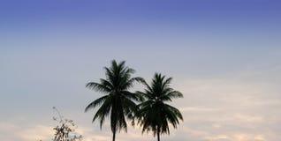 Arbres de noix de coco, fond lumineux de ciel photos libres de droits