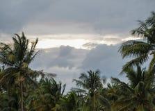 Arbres de noix de coco pendant une tempête photos stock