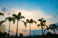 Arbres de noix de coco de silhouette Photo stock