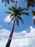 Arbres de noix de coco Photo libre de droits