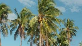 Arbres de noix de coco Photos stock